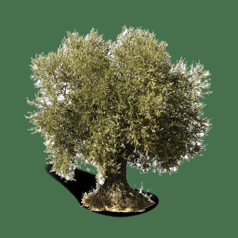 Olivo-villamolar