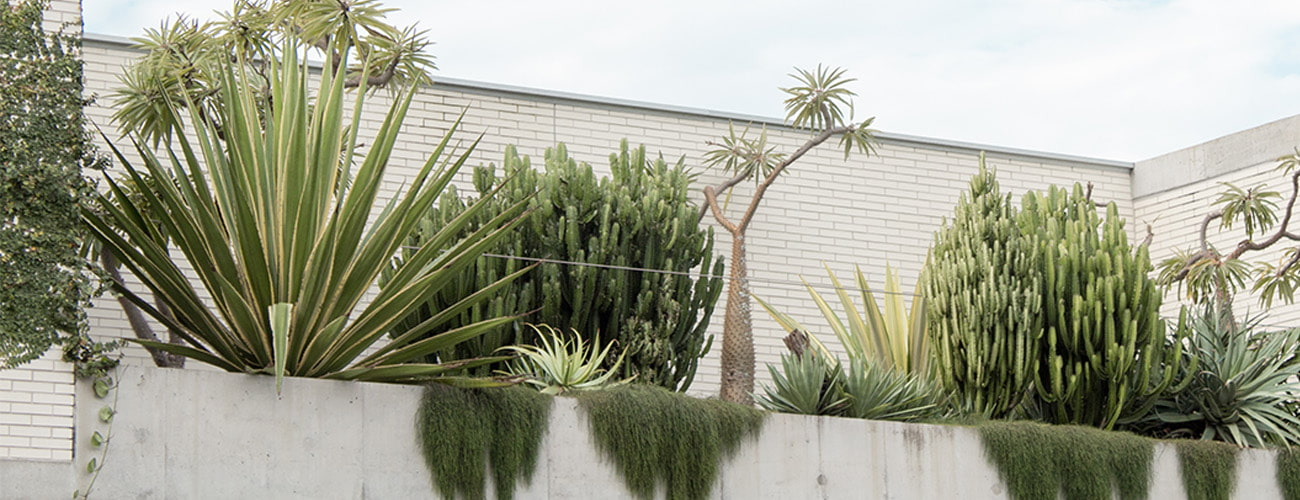 Plantas del mediterráneo en viveros Villa-Molar