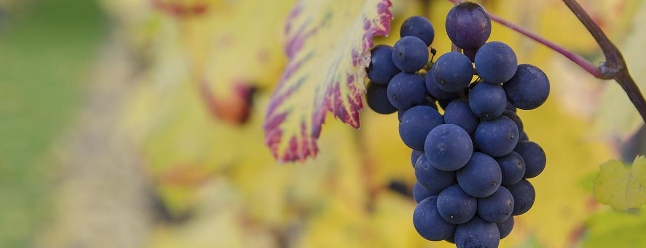 Árboles frutales en viveros Villa-Molar