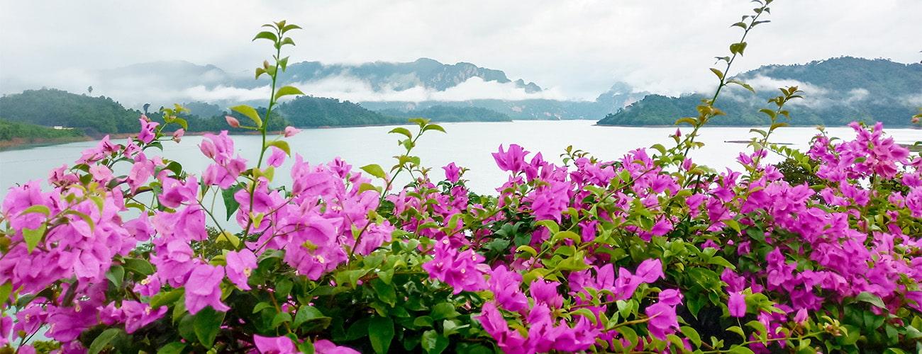 Plantas arbustivas en vivieros Villa-Molar