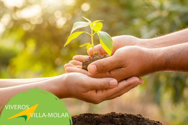 ¿Cuál es el mejor árbol para plantar en casa?